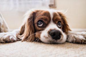 מזון לגורי כלבים