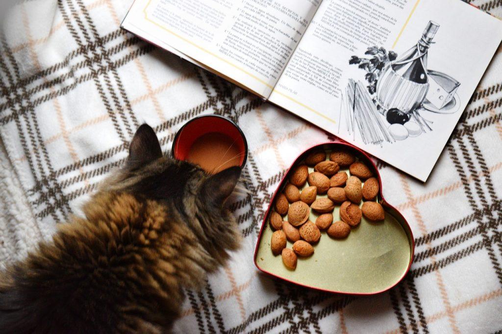 האכלה נכונה של חתול שמן