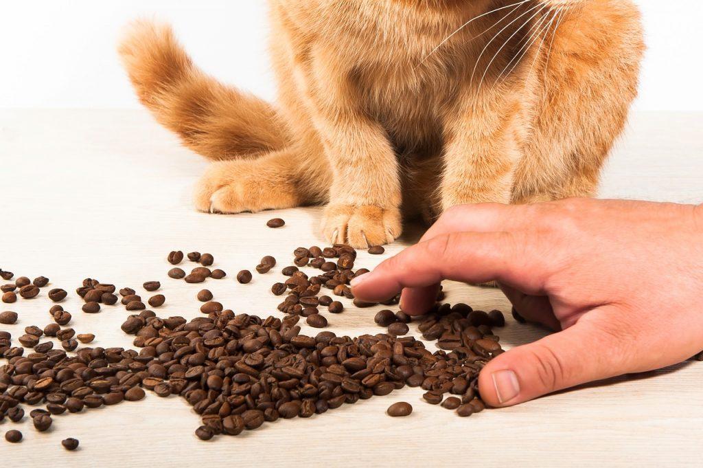 מניעת מזון מזיק מחתול