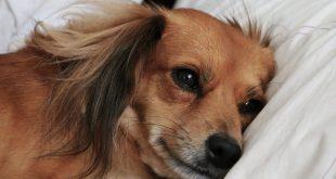 מזון לכלבים הסובלים מבעיות